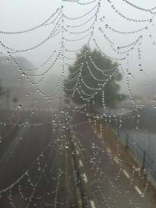 Bilder på spindelnät